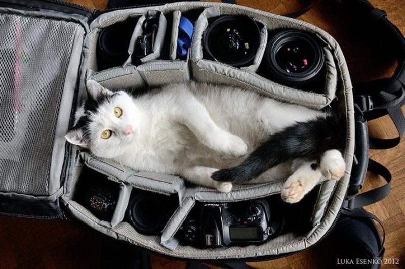 Про, смешные картинки с чемоданом и животными