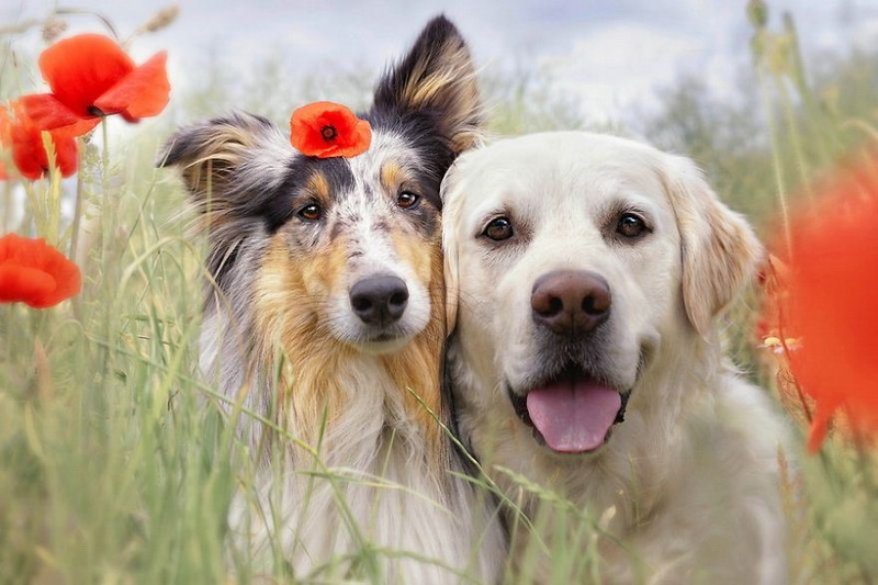радостные собачки картинки начато строительство