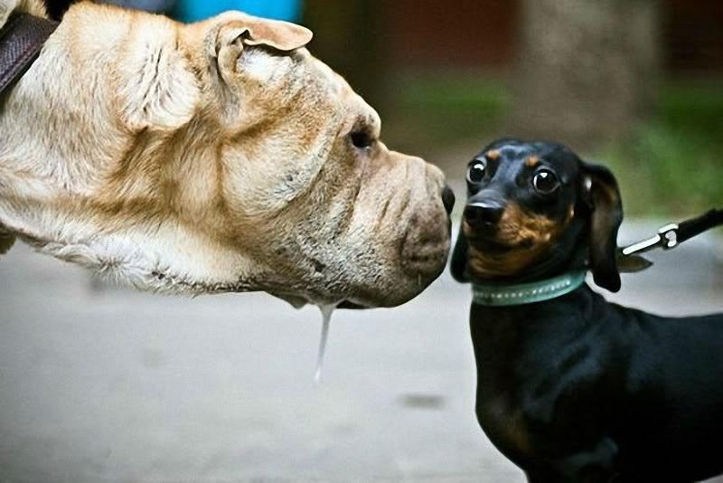 Собака смешные цитаты, открытки картинки