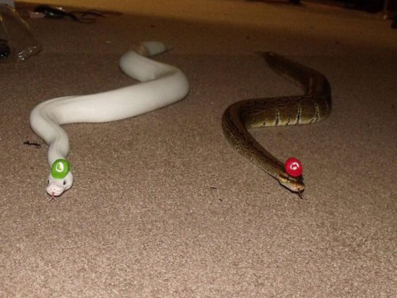 Змеи в картинках приколы