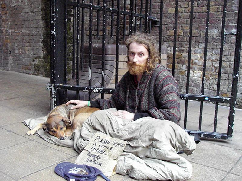 картинки нищета и собаки дачу нас сразу
