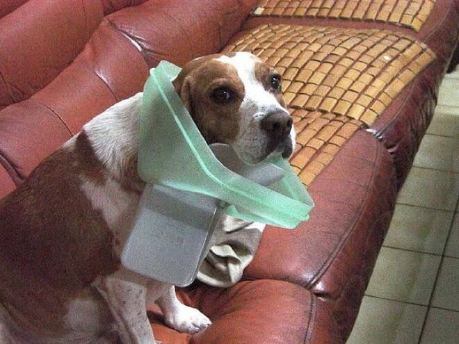 легко смешные фото виноватых собак также необходимых