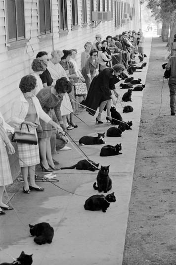 Владельцы чёрных кошек со своими любимицами пришли на кастинг к фильму «Истории ужаса», Голливуд, 1961