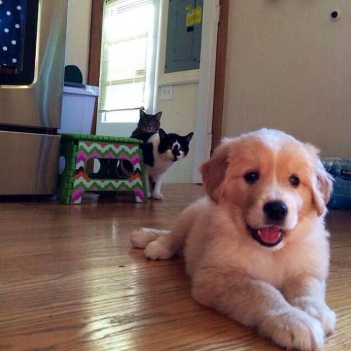 Смешные картинки собак надписями, картинки