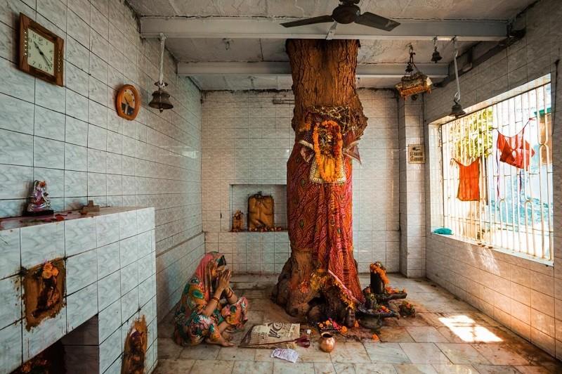 Дерево ним в храме Нангхан-Би-Баба, Северная Индия. Оно является символом богини Шиталы — одной из самых популярных сельских богинь.