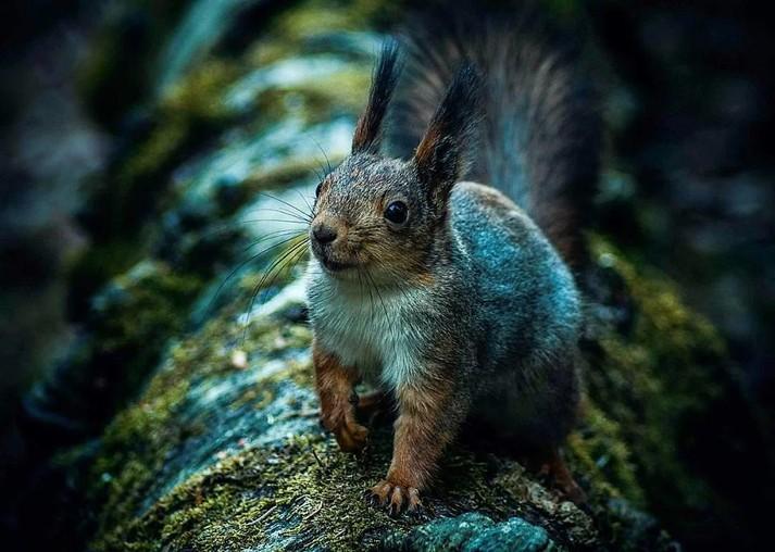 люди фотографии всех лесных животных управлений