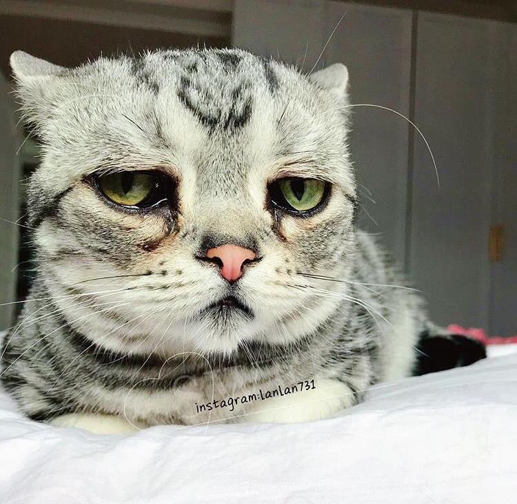 Фото с грустным котом