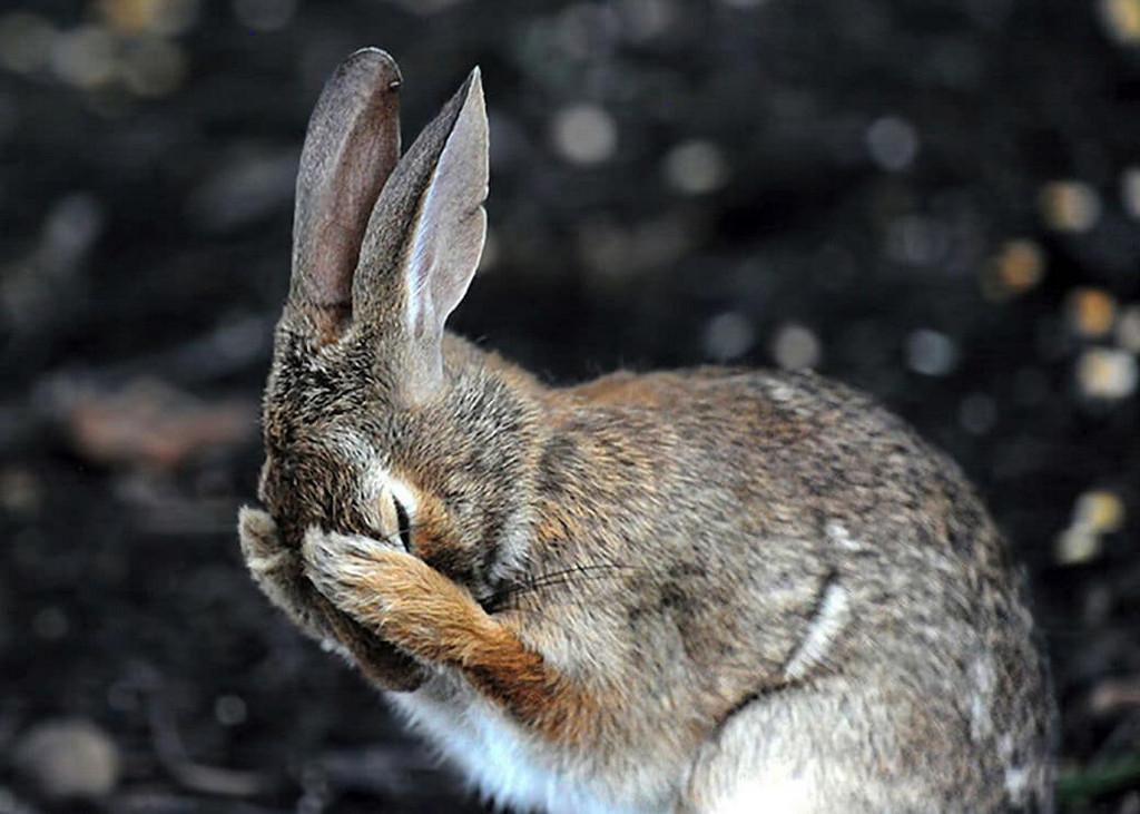 прикольные фото про зайца результате волосы переливаются