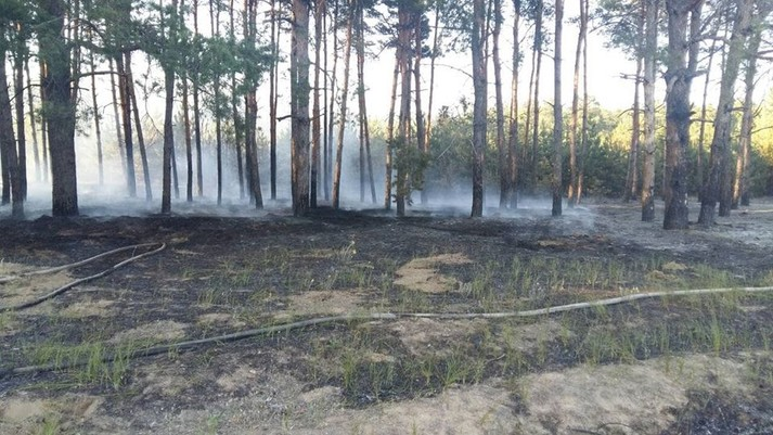 На Миколаївщині невідомі влаштували у лісі пожежу