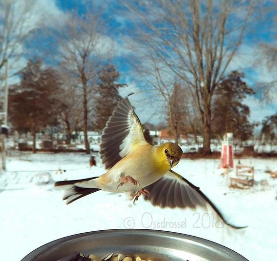 этот день в какую погоду лучше фотографировать птиц мебель, натурального
