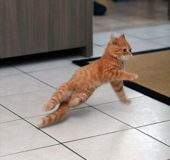 Новым годом, смешная картинка котенок на танцах