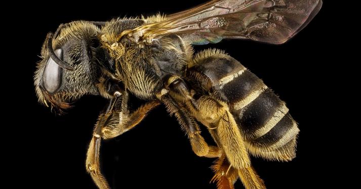 Бджоли визнані найважливішими істотами на Землі
