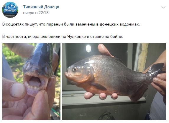 «Піранії» облюбували водойми Донецька (фото)