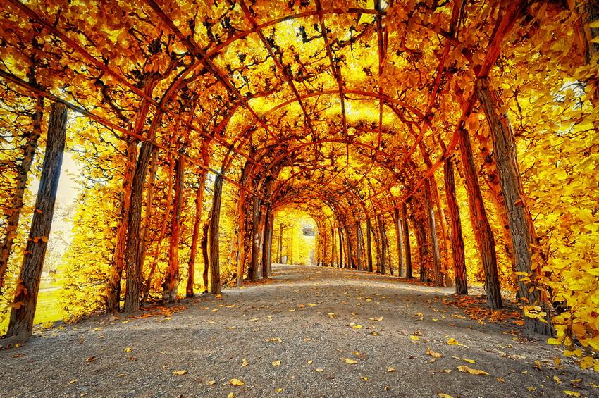 Лучшее место для вдохновения: прогулка по осеннему парку (ФОТО)