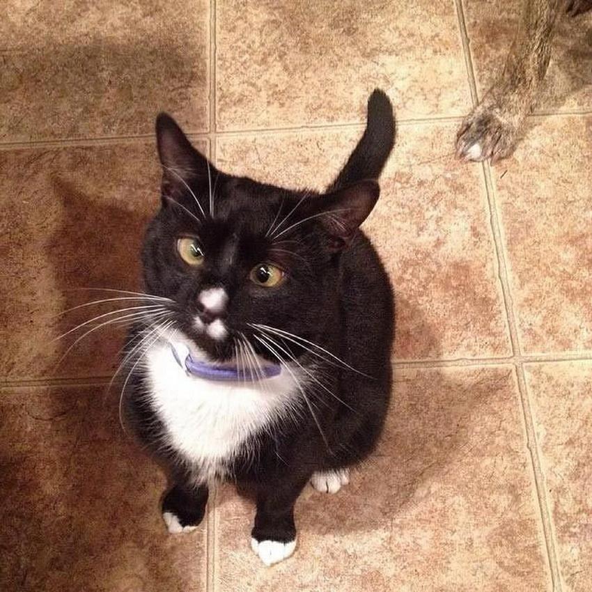 коты с косыми глазами фото спутник
