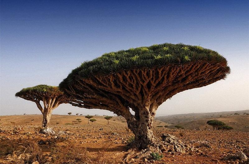 Очень редкое дерево оно называется