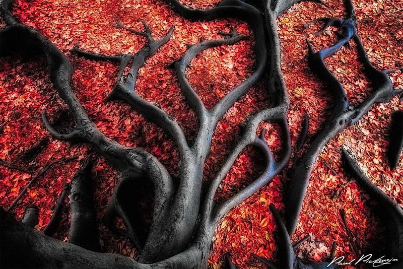 Черные корни на красных листьях фото