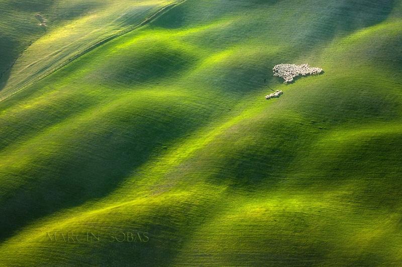 Живописные поля Италии: стада овец и прочая пасторальная красота (фото 1)