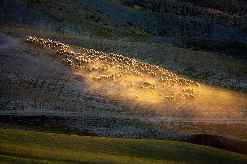 Живописные поля Италии: стада овец и прочая пасторальная красота (фото 2)