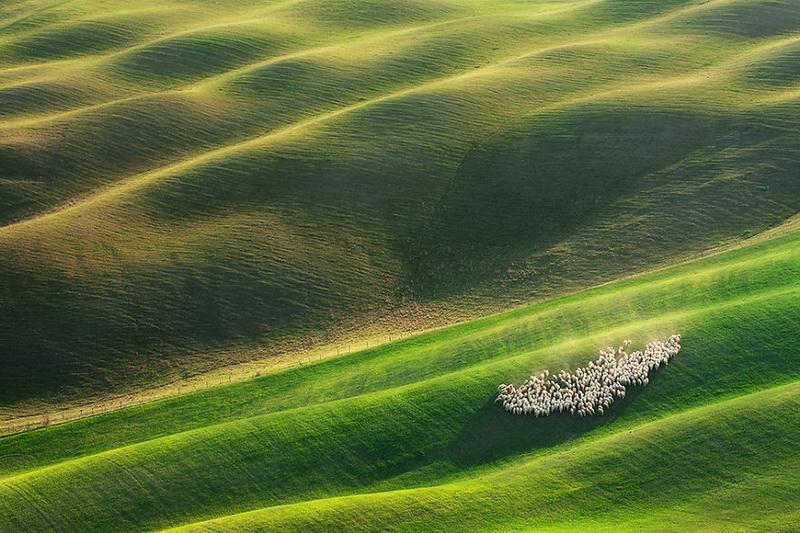 Живописные поля Италии: стада овец и прочая пасторальная красота (фото 3)
