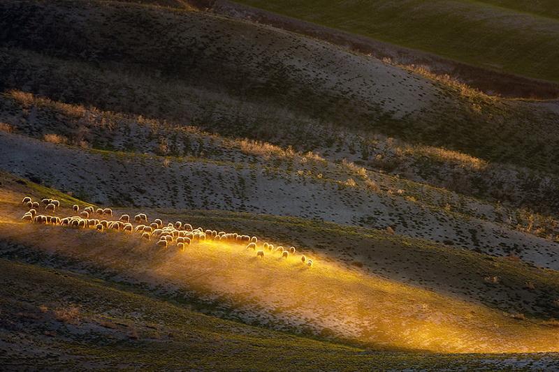 Живописные поля Италии: стада овец и прочая пасторальная красота (фото 4)