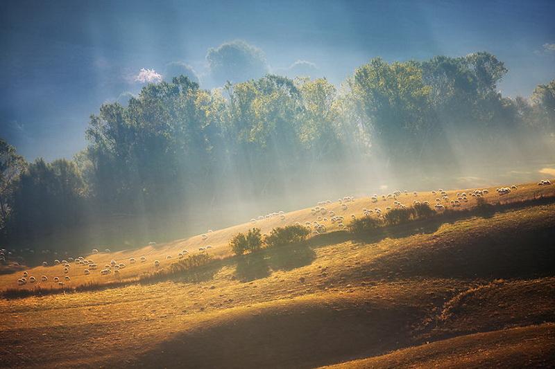 Живописные поля Италии: стада овец и прочая пасторальная красота (фото 5)