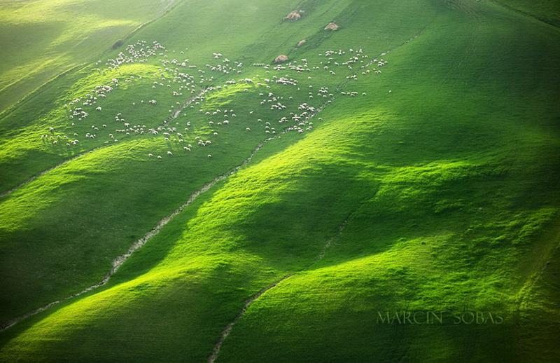 Живописные поля Италии: стада овец и прочая пасторальная красота (фото 7)