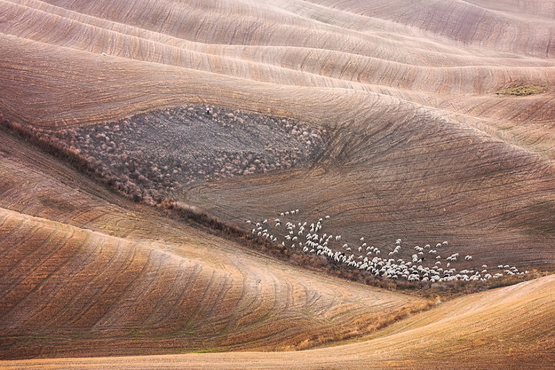 Живописные поля Италии: стада овец и прочая пасторальная красота (фото 9)
