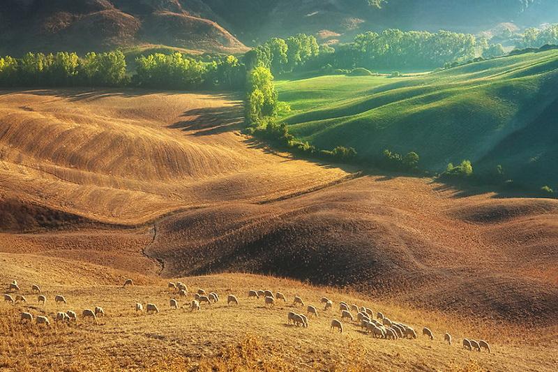 Живописные поля Италии: стада овец и прочая пасторальная красота (фото 11)