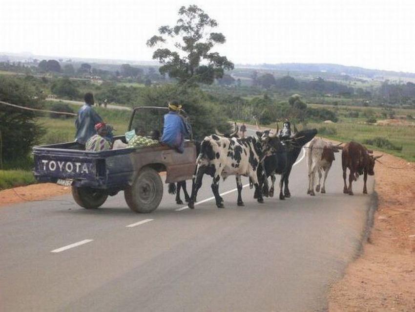 Такое возможно только в Африке (фото 3)