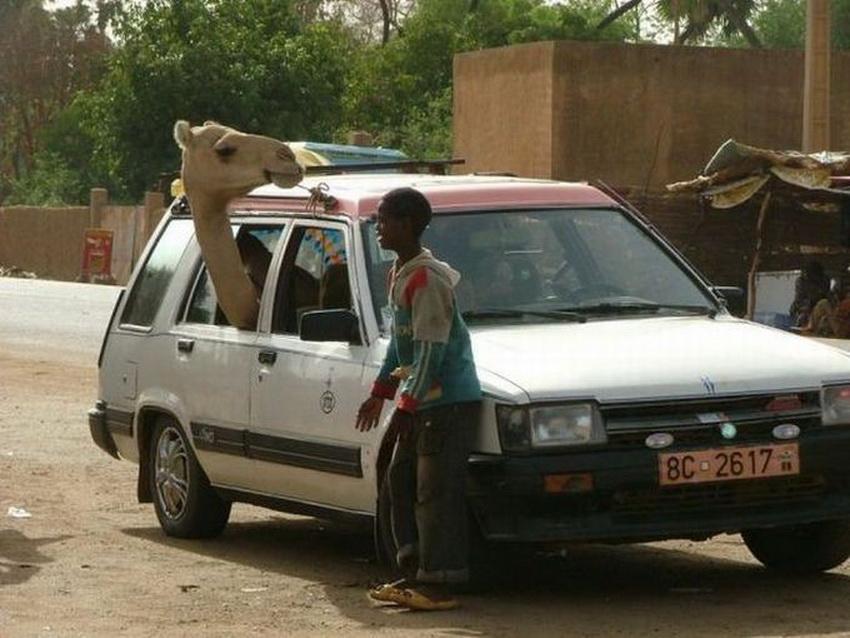 Такое возможно только в Африке (фото 5)