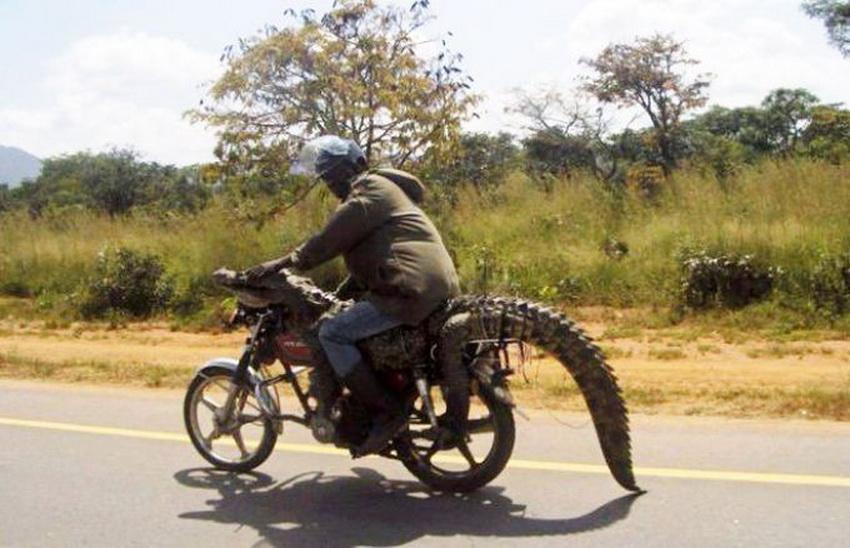 Такое возможно только в Африке (фото 6)