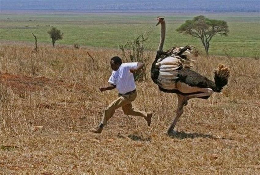 Такое возможно только в Африке (фото 11)