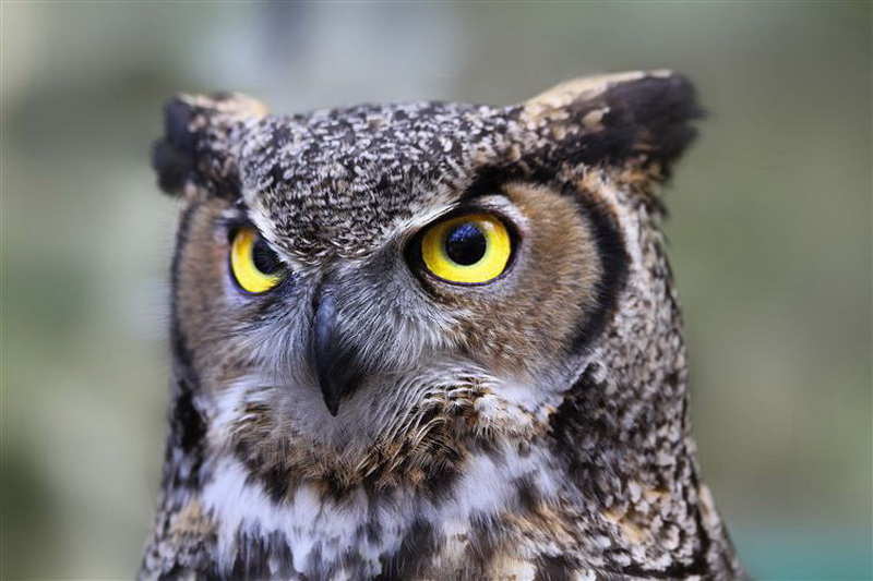"""Египет. В Египте """"несчастливыми"""" животными считаются совы: считается, что они приносят плохие вести тем, кто увидит или услышит их."""