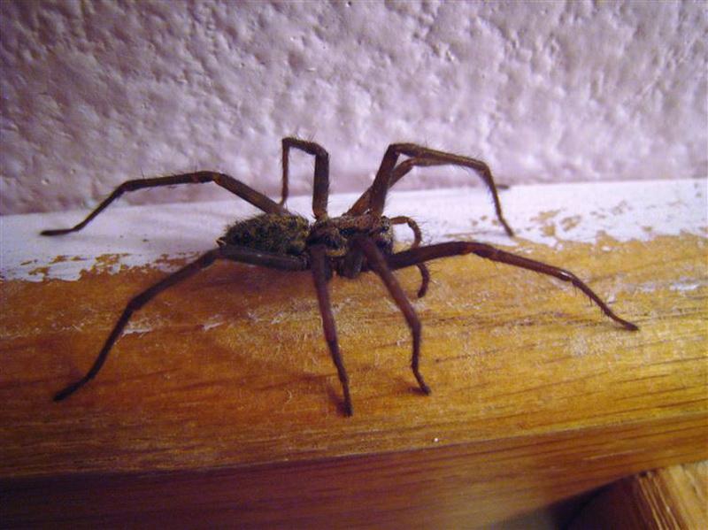 Финляндия. В Финляндии (и в некоторых других странах) считают, что убить паука - к дождю.
