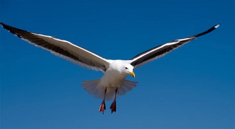 Болгария. Здесь верят, что, если на вас упадут птичьи экскременты - это счастливый знак!