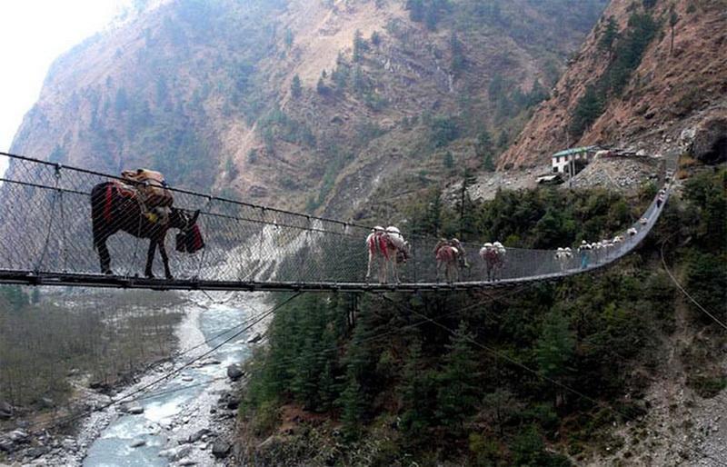 Подвесной мост Гхаса — Непал.  Этот мост выглядит очень старым и ветхим, однако активно используется каждый день и по нему передвигаются не только люди, но и животные. Так что, решившись на переход, подумайте сначала как разминуться с ослом на середине.