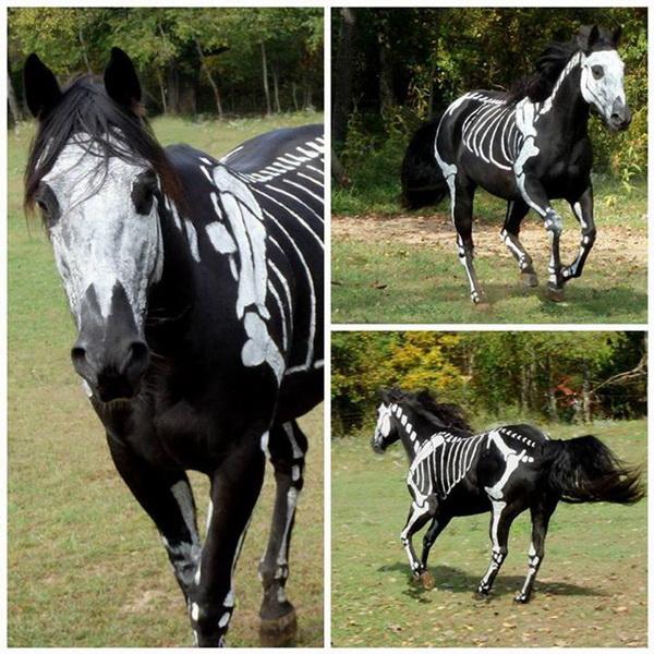 Лошадь-скелет