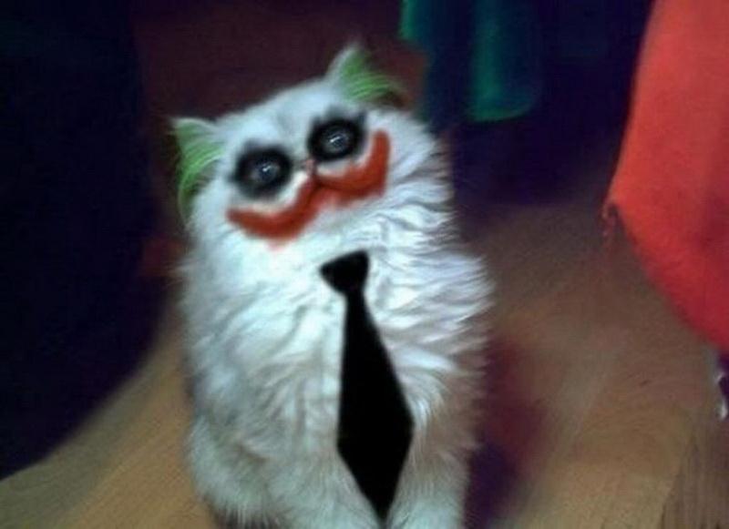 Кот-Джокер