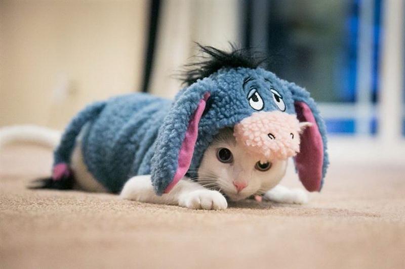 Котёнок - ослик Иа