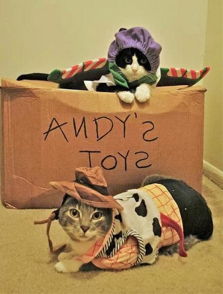 Коты в виде Вуди и Базза Светика