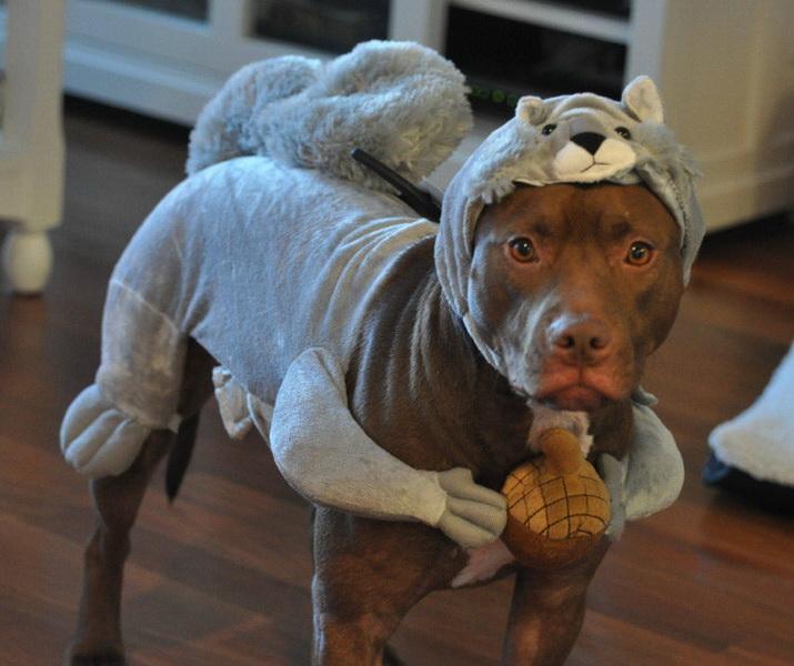 Собака-белка