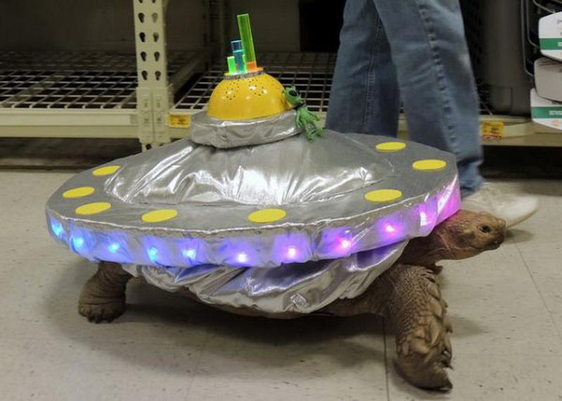 Черепаха - летающая тарелка