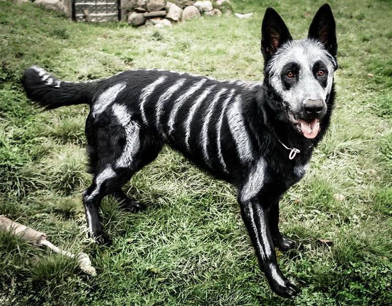 Собака-скелет