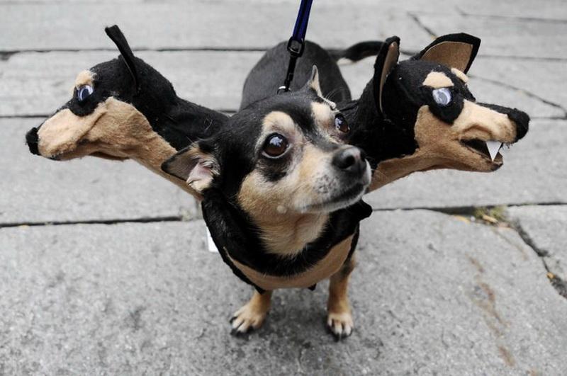 Собака-цербер