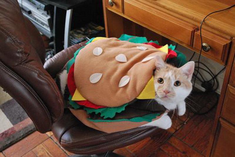 Чизбургер с котом